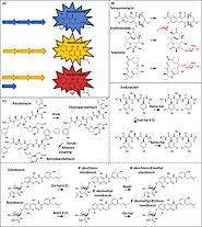 Actinorhodin - an overview | ScienceDirect Topics