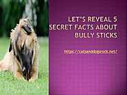 LET'S REVEAL 5 SECRET FACTS about BULLY STICKS |authorSTREAM