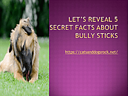 LET'S REVEAL 5 SECRET FACTS ABOUT BULLY STICKS | edocr