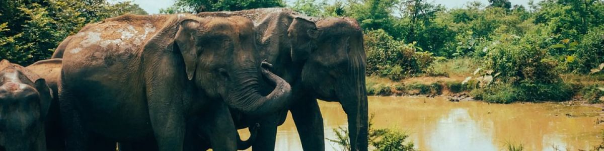 Headline for 5 of Sri Lanka's Best Wildlife National Parks – Remarkable Nature Sanctuaries
