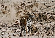 Golden Triangle Tour With Tigers - Including National Park
