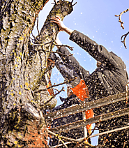 Best Tree Pruning Service Melbourne