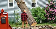 Why Tree Removal Important for your garden?