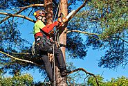Things To Remember About Tree Removal