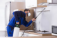 Why Hiring Commercial Pest Control In Shepherds Bush Is A Wise Decision?