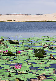 Mui Ne Lotus Lake
