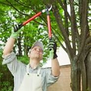 Effective And Prompt Tree Removal Service