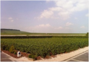 France Wine Tours: VeuveFourny-a Champagne of the Moment