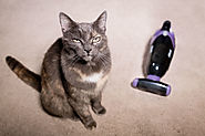 {Top 20} Best Cordless Vacuum for Pet Hair Reviews [2020]
