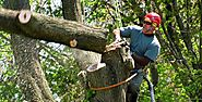 Arbor-All Tree Care - Google Search