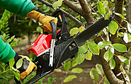 Best Tips To Grow And Take Care Of Your Plantation. - Arbor-All Tree Care
