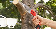 Tree Removal and Grooming Services in Edmonton