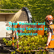 Tree Removal and Chipping Services in Edmonton