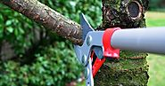 Finding a Reliable Company to Hire For Tree Maintenance in Edmonton