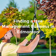 Finding a tree management business in Edmonton