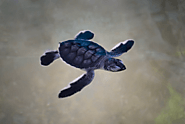 Sea Turtles Conservation Research Project
