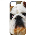 Bulldog ID™ iPhone 5 Case from Zazzle.com