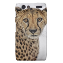 Cheetah in Snow Close Up Motorola Droid RAZR Cover from Zazzle.com