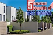 Benefits of Tree Removal