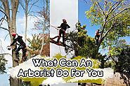 Local Certified Arborist That You Can Truly Trust - Blog