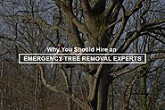 Emergency Tree Removal Experts: Why Hire Only The Experts - Blog