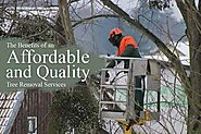 Affordable and Quality Tree Removal Services - Call Us Today | All About Trees