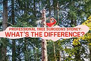 Professional Tree Surgeons Sydney Vs. Sydney Arborists - Blog