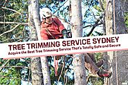 Tree Trimming Service | How To Choose The Right Service - Blog