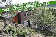 Professional Tree Cutting Service Sydney | Call Us! - Blog
