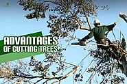 The Benefits and Advantages of Cutting Trees - Blog