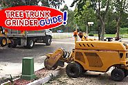 Tree Trunk Grinder: When Is The Best Time To Cut A Tree - Blog
