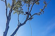 Tree Lopping Sydney - Tall Timbers Tree Services - Blog