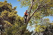 Why You Need Tree Cutting Service in Your Area - Blog