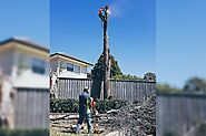 Emergency Tree Removal : When and How to Take an Action - Blog