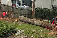 Stump Removal Service - Remove Stumps Quickly and Easily - Blog