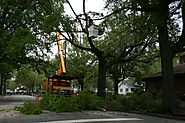 Tree Removal Sydney Services - Tall Timbers Tree Services - Blog