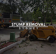 Reason Why You Need Stump Removal Sydney - Blog