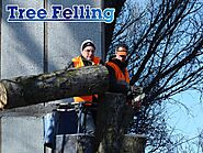 Tree Felling - Tall Timbers Tree Services
