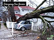 Emergency Tree Service | Professional Tree Services - Blog