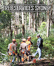Tree Services Sydney - Tall Timbers Tree Services