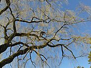 Tree Pruning Services Sydney: Top Reasons to Prune Trees - Blog