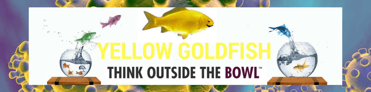 Headline for Yellow Goldfish Covid-19 Edition Project