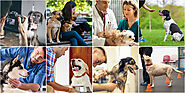 8 Best Career Options for Pet Lovers