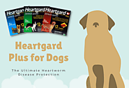 Heartgard Plus for Dogs: Protect Your Dog from Heartworm Disease