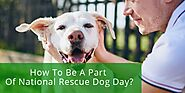 How To Be A Part Of National Rescue Dog Day?