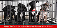 5 Ways To Contribute On National Foster a Pet Month