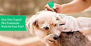 How Does Topical Flea Treatments Work On Your Pets?