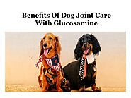 Benefits Of Dog Joint Care With Glucosamine