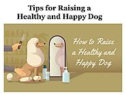 Tips for Raising a Healthy and Happy Dog