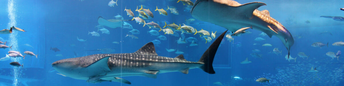 Headline for 6 Fun Facts About The S.E.A. Aquarium, Singapore -All you need to know